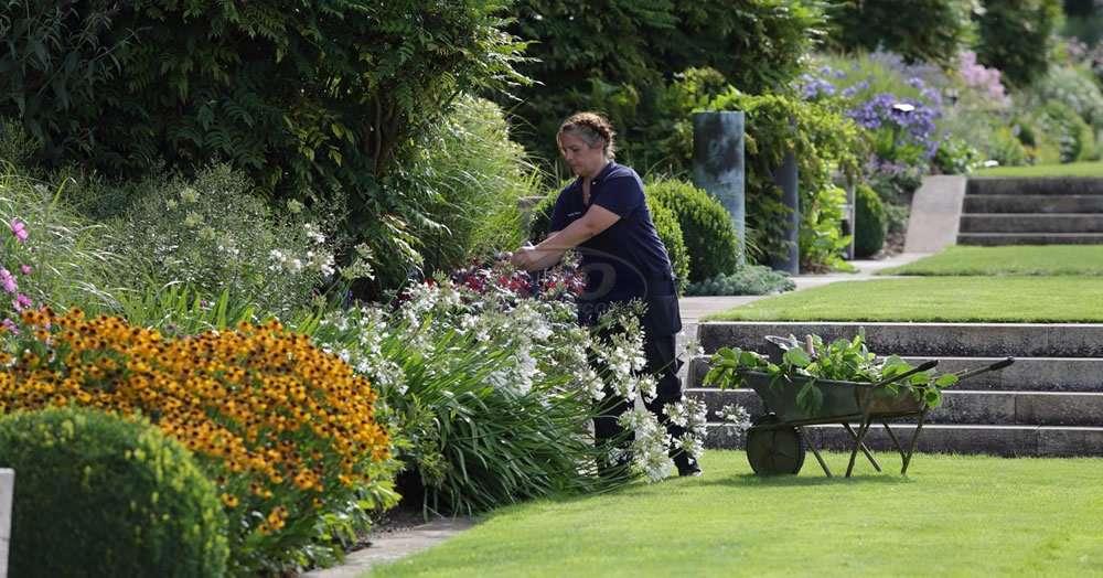 Serviço de jardinagem em instituições de ensino na cidade de Diadema/SP