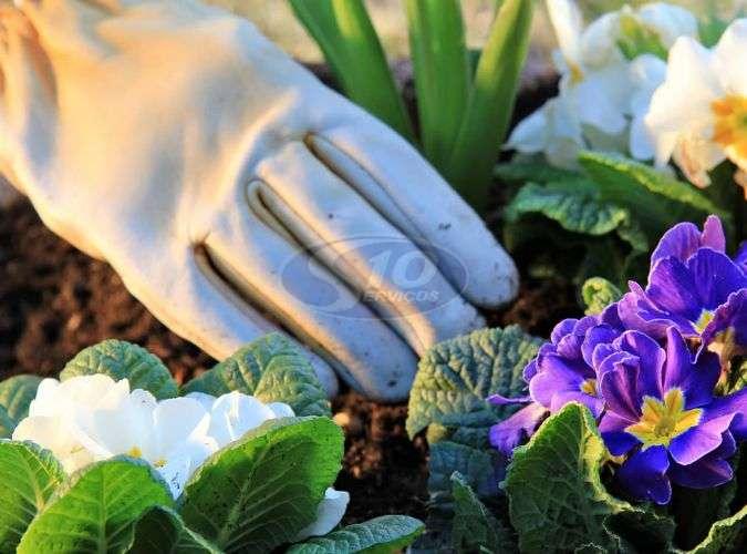 Serviços de jardinagem terceirizada - Foto: 1