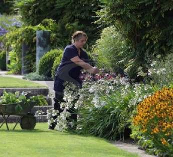 Serviço de jardinagem em hospitais na cidade de Barueri/SP