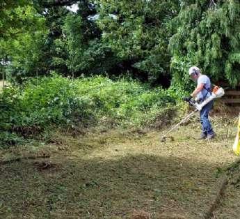 Foto: Serviço de jardinagem em instituições de ensino na cidade de São Caetano do Sul/SP